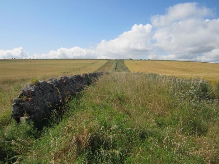 Grassy field margin