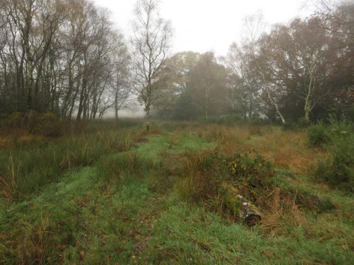 Grassland at Bog House
