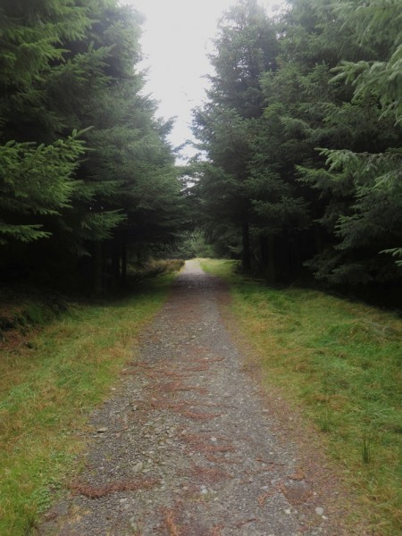Track in Thornthwaite Forest