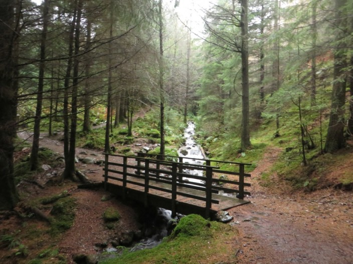 Footbridge crossing a stream in the forest