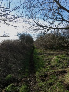 A bridleway and farm track