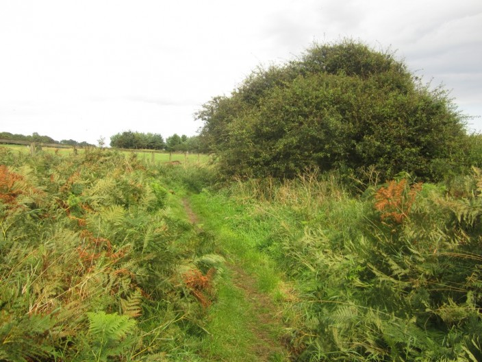 Footpath through bracken