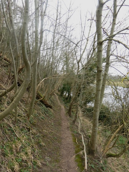 Path passing through trees