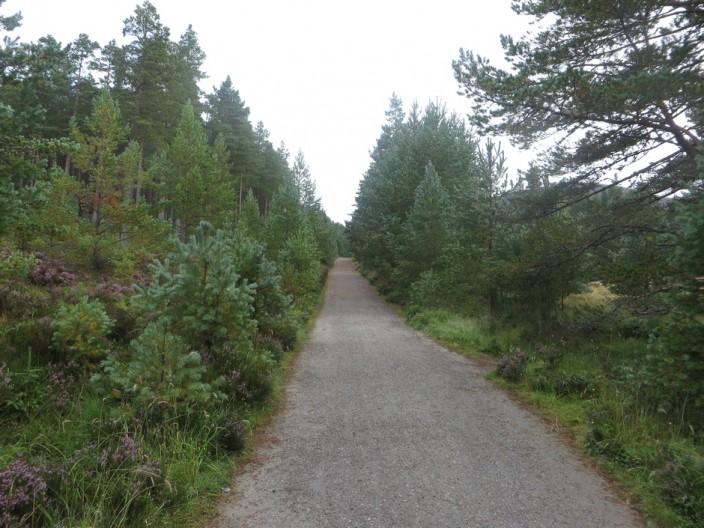 Wide path between trees