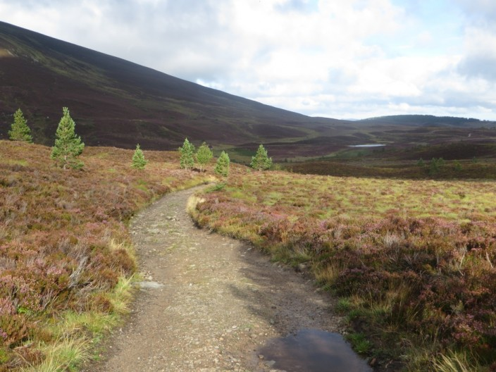 A path through a landscape of heather