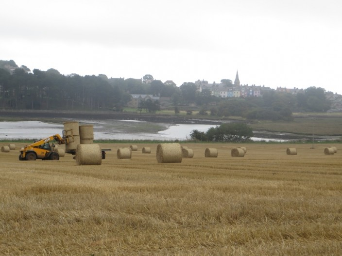 Fields beside Alnmouth