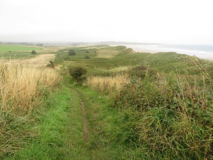 Vegetation covered dunes