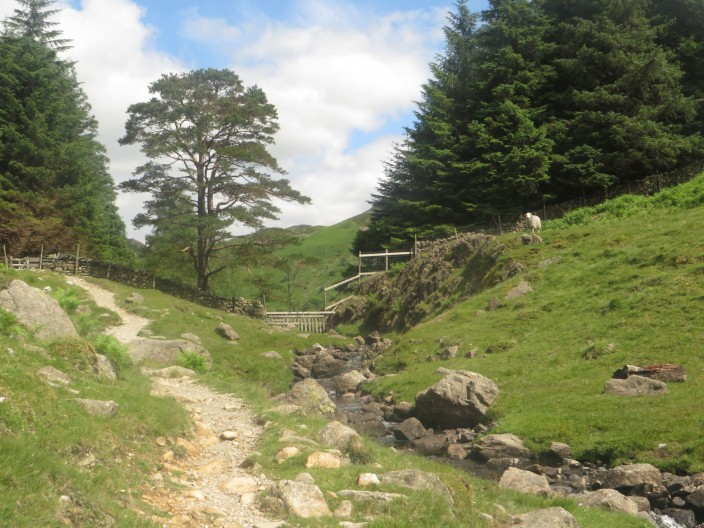 footpath south of Blea Tarn