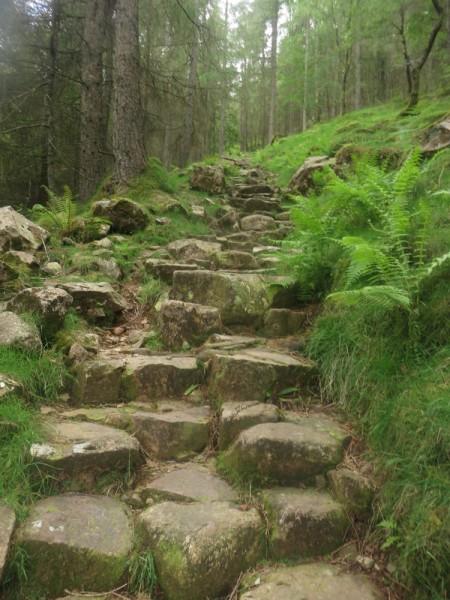Path through Butness Wood